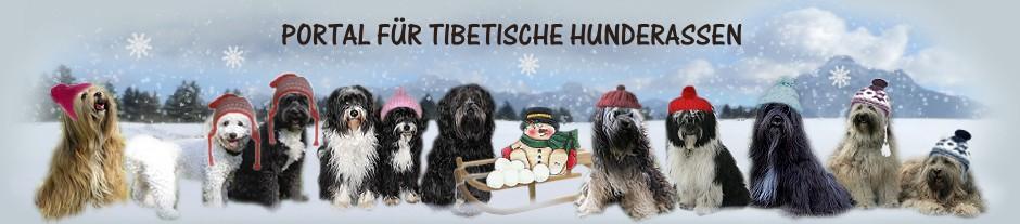 Tibeter-Forum.de